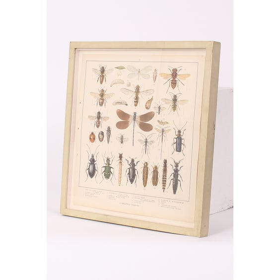 Vintage 'Helpful' insect print image