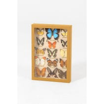 Assorted mounted butterflies