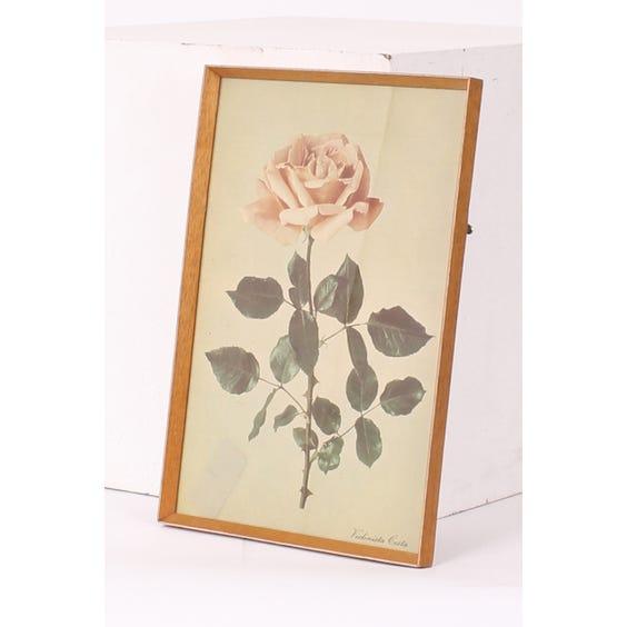 Violinista Costa pink rose print image
