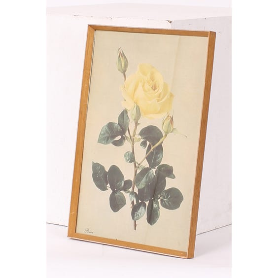 Peace yellow rose print image