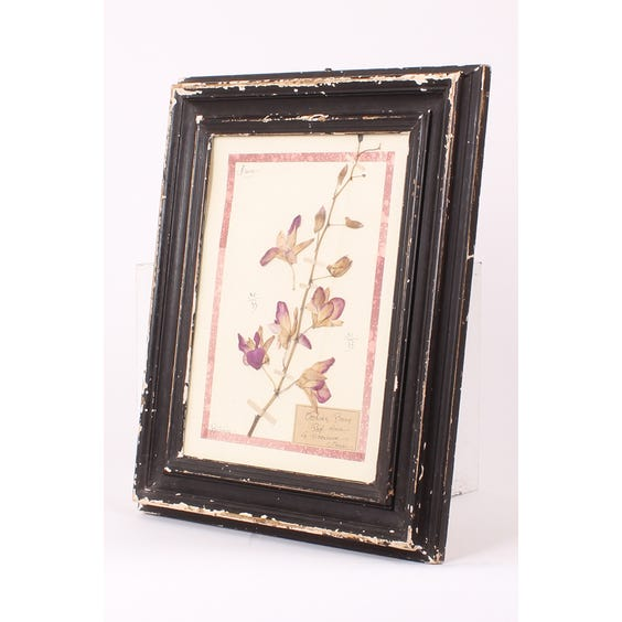 French pressed purple flowers image