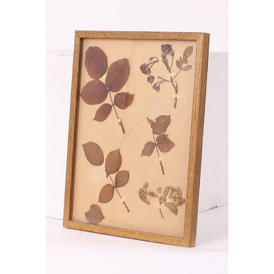 Mounted pressed leaves and flowers image