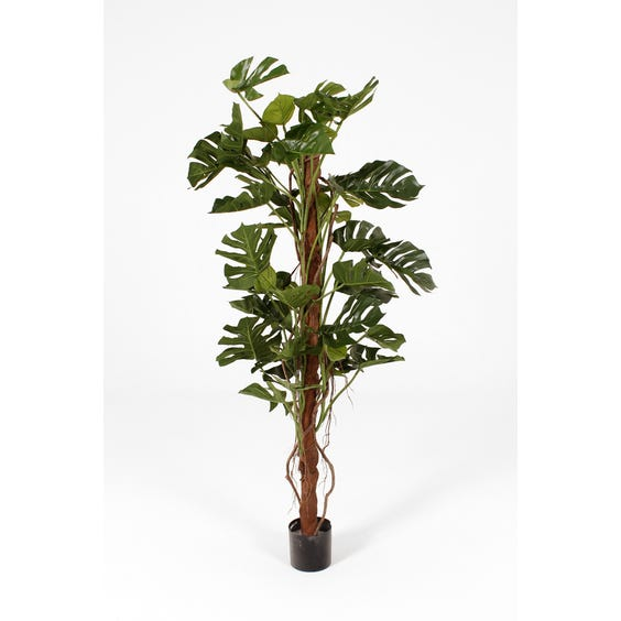 Large artificial cheese plant image