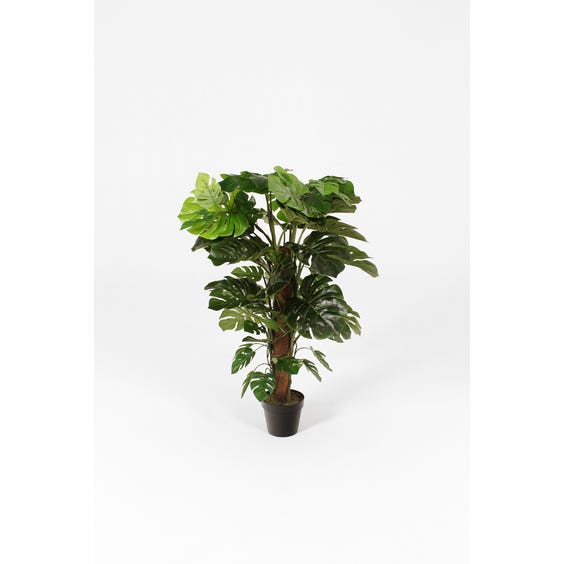 Artificial cheese plant image