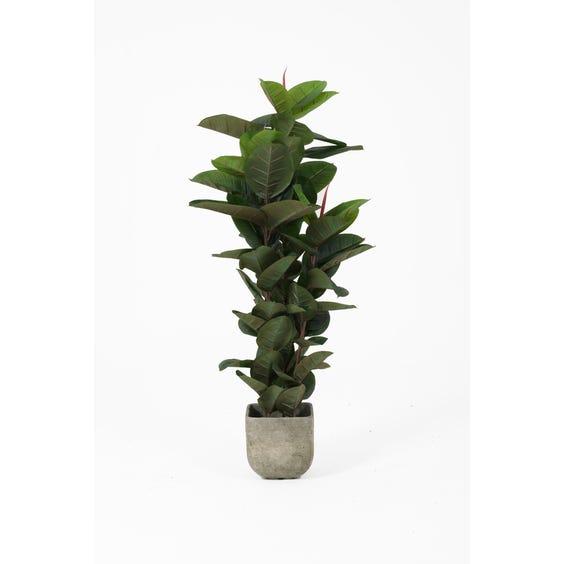 Artificial rubber plant image