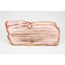 Oblong petrified wood slab