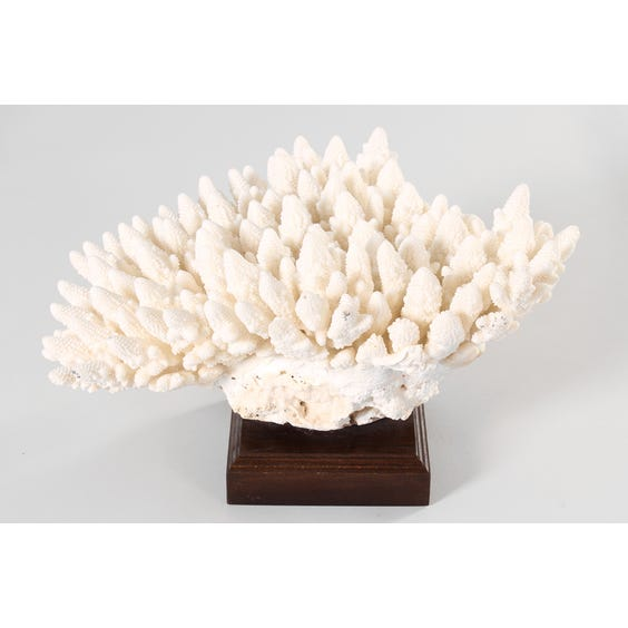 Giant piece of white coral image