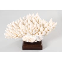 Giant piece of white coral